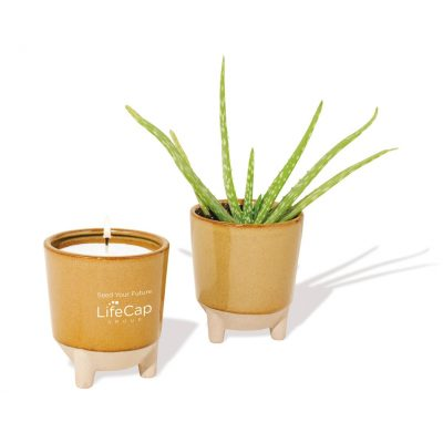 Modern Sprout Glow & Grow Live Well Gift Set - Amber: Desert Oasis w- Aloe Seeds
