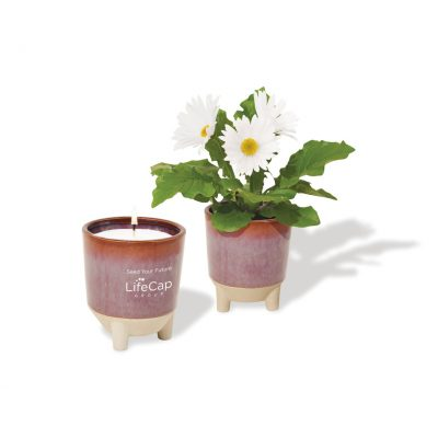 Modern Sprout Glow & Grow Live Well Gift Set - Burgundy: Wildflower w- Daisy Seeds