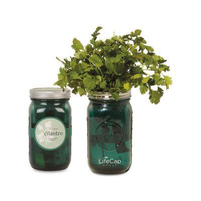 Modern Sprout® Indoor Herb Garden Kit - Lavender