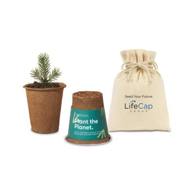 Modern Sprout® One For One Tree Kits - Spruce
