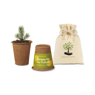 Modern Sprout® One For One Tree Kits - Sycamore