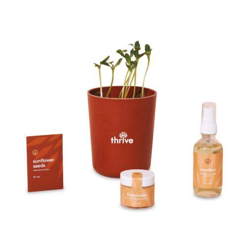 Modern Sprout® Shine Bright Take Care Kit - Sunflower - Shine Bright Sunflower